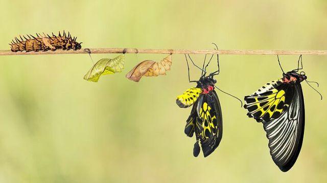 butterflies-transformation