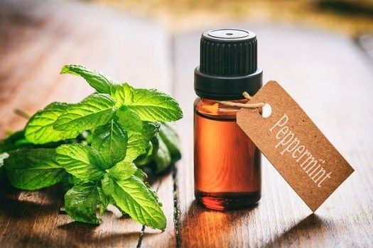 HOW TO USE PEPPERMINT OIL FOR BED BUGS