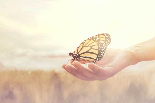 What does it mean when a butterfly lands on you?