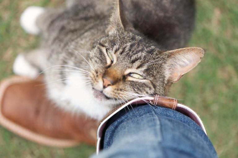 What Does It Mean When Cats Rub Against You