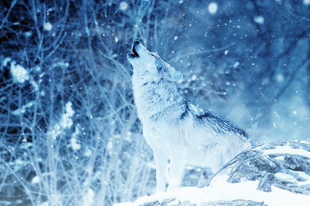 What Does It Mean When You Dream About Wolves?