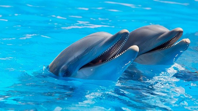 What Does It Mean When You Dream About Dolphins?