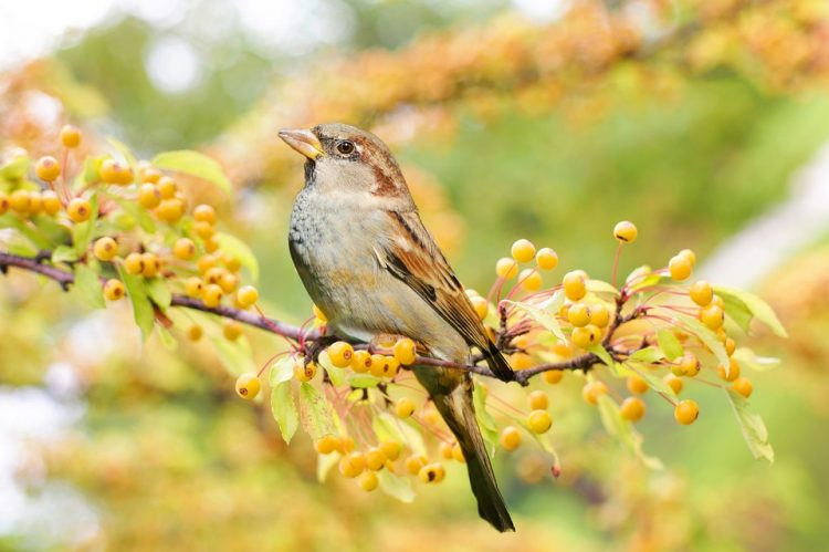 The Sparrow Christian Dream Symbol