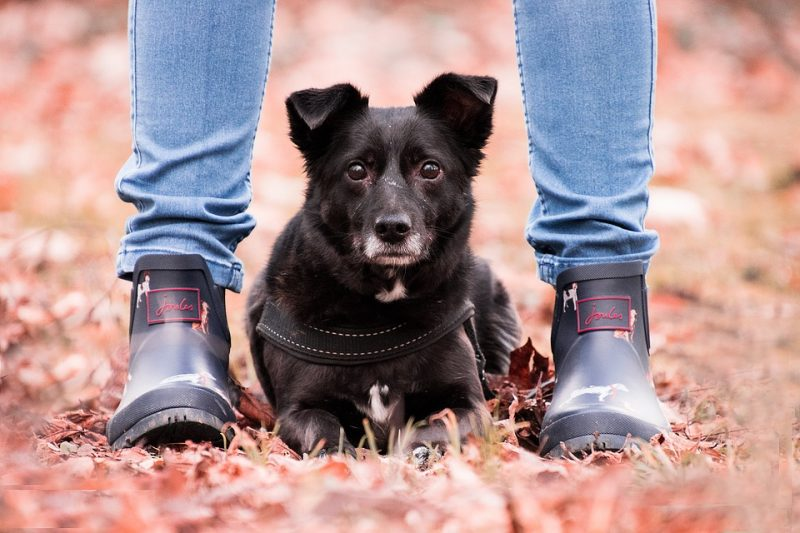 What Does It Mean When A Dog Sits On Your Feet?